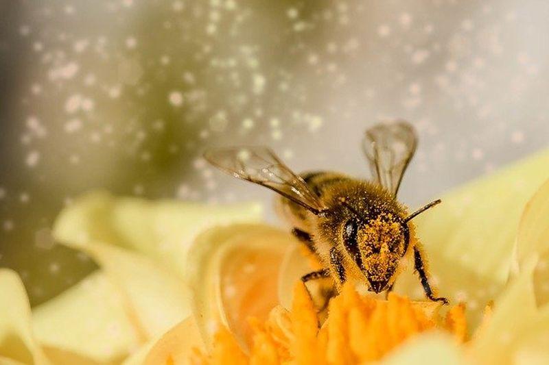 Čebelji vosek od naših pridnih čebelic